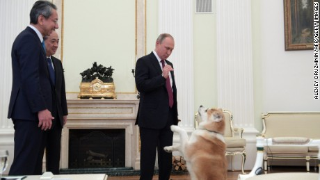 Putin plays with his dog Yume before an interview with Japanese media.
