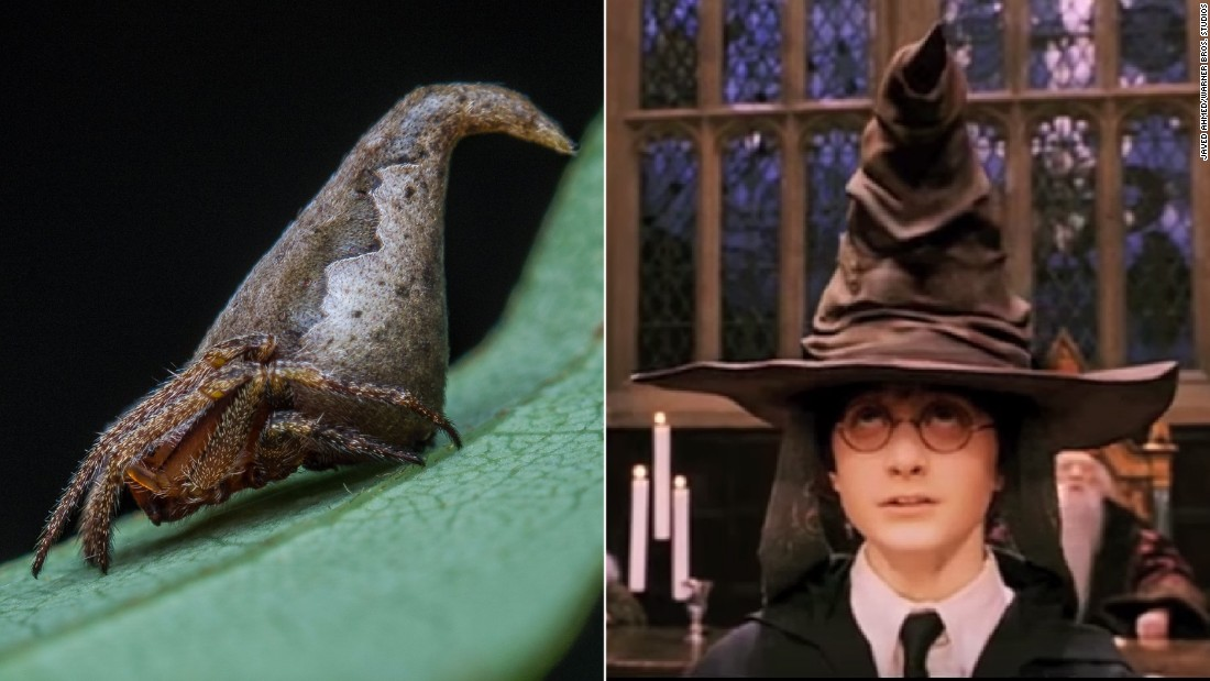 New species of spider named after enchanted 'Harry Potter' sorting hat