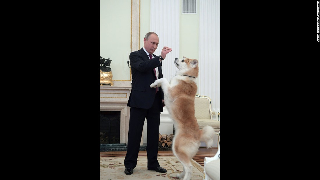 Putin plays with his Yume, an Akita dog, prior to an interview by Nippon Television Network Corporation on December 7, 2016.