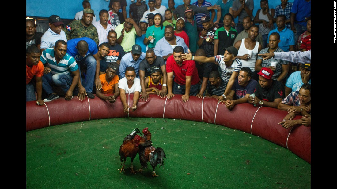 People watch a cockfight in Santo Domingo, Dominican Republic, on Sunday, December 18. Cockfighting is a legal sport there.