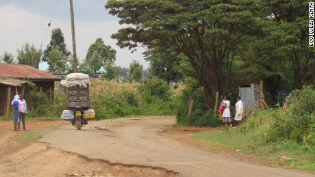 Croton trees on village road in rural Kenya. Few farmers are aware the crop has value.
