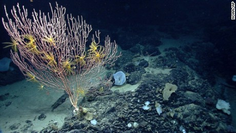 The National Oceanic and Atmospheric Administration took this photo of corals on Mytilus Seamount off the coast of New England in the North Atlantic Ocean.