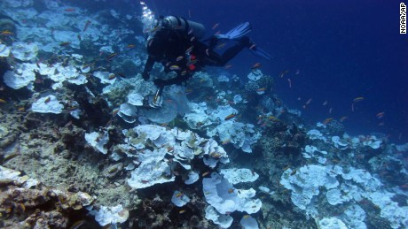 A diver inspects dead coral around Jarvis Island, which is part of the US Pacific Remote Marine National Monument.