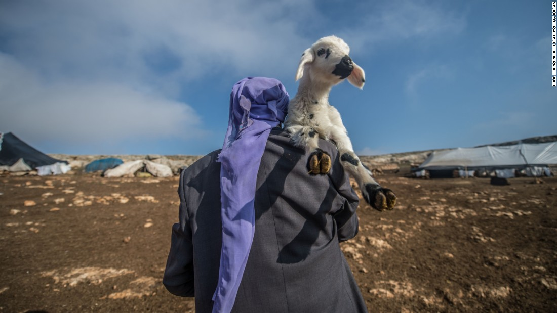 A 75-year old breeder, Seydi Turan, carries a lamb on his shoulder in Sanliurfa, Turkey on Thursday, December 29. He and his wife take care of approximately 500 sheep night and day in a tent which he set up with the help of his wife.