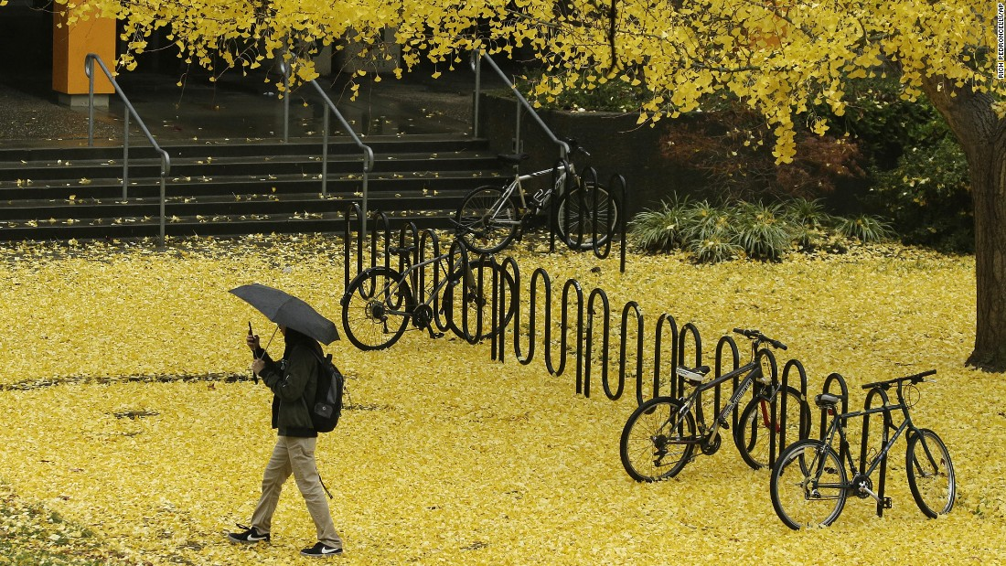 Gold-colored leaves cover the sidewalk at California State University in Sacramento, California, on Thursday, December 8.