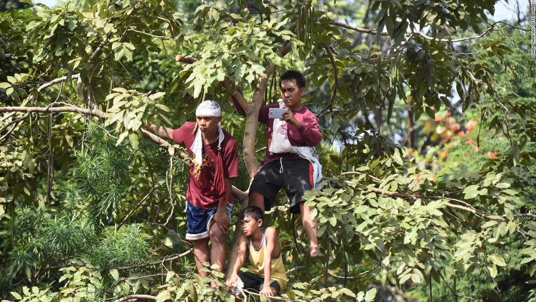 Men climb a tree to get a better view of the procession.