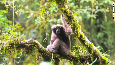 "The Skywalker gibbon, named for the ""Star Wars"" character, is one of dozens of new species discovered in the Greater Mekong region in 2017."