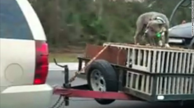 Authorities Are Investigating A Florida Driver After Video Surfaced Of A Dog Being Chained To The