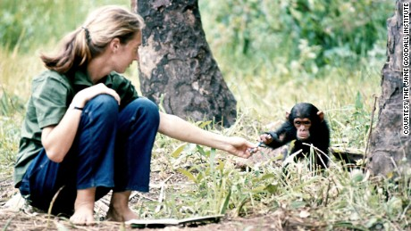 Jane Goodall: The conservation revolutionary