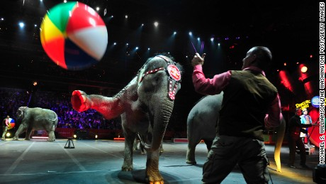 Terry Frisco, elephant trainer for Ringling Bros. with the elephants as they performed a trick where kick beach balls into the crowd at the Verizon Center in Washington D.C.