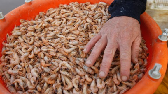 Shrimp shells are among the new feedstocks being used to produce bioplastics.