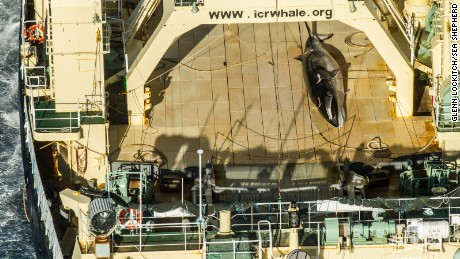 The carcass of a minke whale is seen on a ship. In January, Sea Shepherd said it caught Japanese poachers trying to cover up the whale.