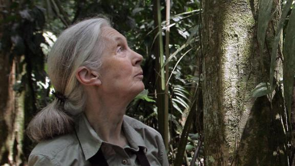 """British primatologist Jane Goodall looks at a tree 02 September, 2007, at La Selva Biological Station in Sarapiqui, 80kms noreast from San Jose. Goodall, best-known for her studies on chimpanzees, visits Costa Rica to see the course of her program """"Roots & Shoots"""" involving children and young people with projects related with animals, the enviromental and the human community.  AFP PHOTO/Mayela LOPEZ (Photo credit should read MAYELA LOPEZ/AFP/Getty Images)"""