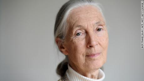 In these 'very dark times,' Jane Goodall explains why she is still hopeful