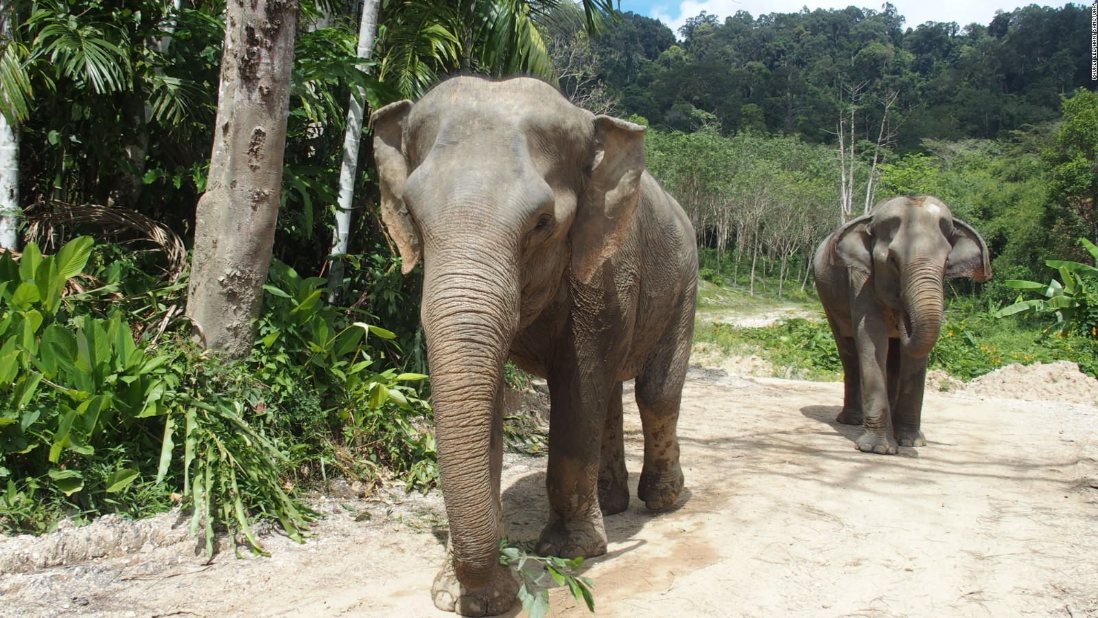 Image result for phuket elephant sanctuary