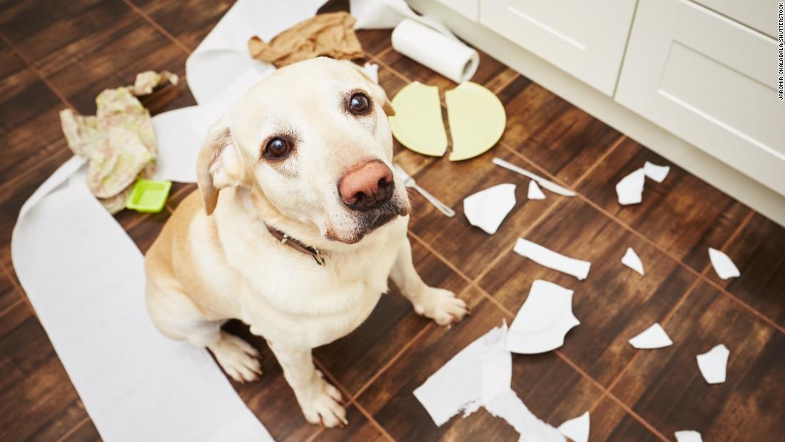 FDA warns that skin cancer cream fluorouracil can kill pets