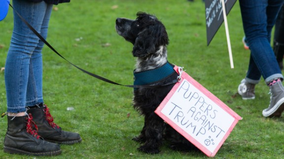 A dog joins demonstrators at the Women