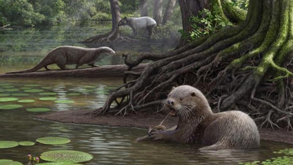 "The discovery of a species that lived 6.6 million years ago in southwestern China suggests that ancient otters had ""wolf-like"" proportions, and weighed roughly 100 Ibs. The creature -- whose skull was excavated in Yunnan province -- would have been twice the size of today"