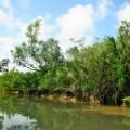 Beautiful India.Sundarbans