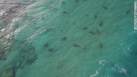 Sharks swim off Israel coast