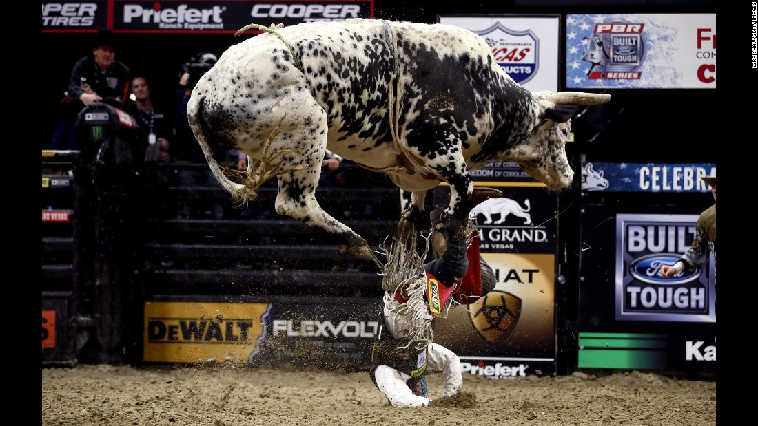 Mike Lee falls off a bull during a Professional Bull Riders event in Sacramento, California, on Friday, January 27.