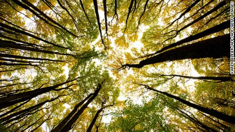 The secret life of trees: Is nature less selfish than we think?