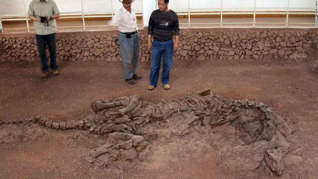"In 2016, researchers <a href=""http://www.cnn.com/2017/02/03/world/dinosaur-rib-195-million-year-old-collagen-history/index.html"">discovered ancient collagen and protein remains</a> preserved in the ribs of a dinosaur that walked the Earth 195 million years ago."