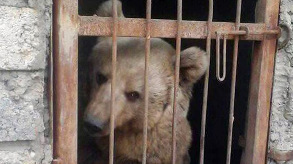 This bear was found in a park after ISIS was driven out of eastern Mosul.