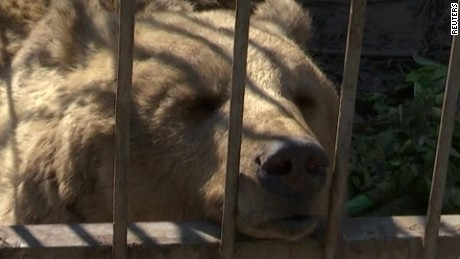 mosul zoo animals mann pkg_00000615.jpg