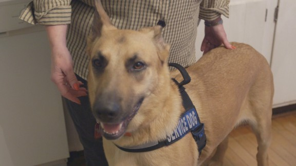 Jeb is a service dog for a man with Charcot-Marie-Tooth disease.