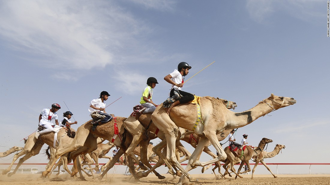 Camels race in Al Ain, United Arab Emirates, on Friday, February 10.