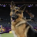 01 Westminster Dog Show 2017