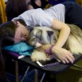 14 Westminster Dog Show 2017