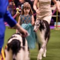 15 Westminster Dog Show 2017