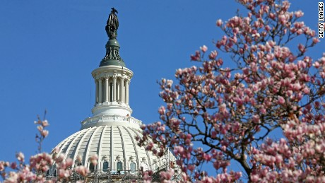 WASHINGTON, DC - MARCH 22: Magnolias are in bloom, while workers continue to remove the scaffolding that surrounds the dome of the US Capitol as restoration nears completion, March 22, 2016 in Washington, DC. The restoration of the cast iron dome was estimated to cost nearly 60 million dollars.