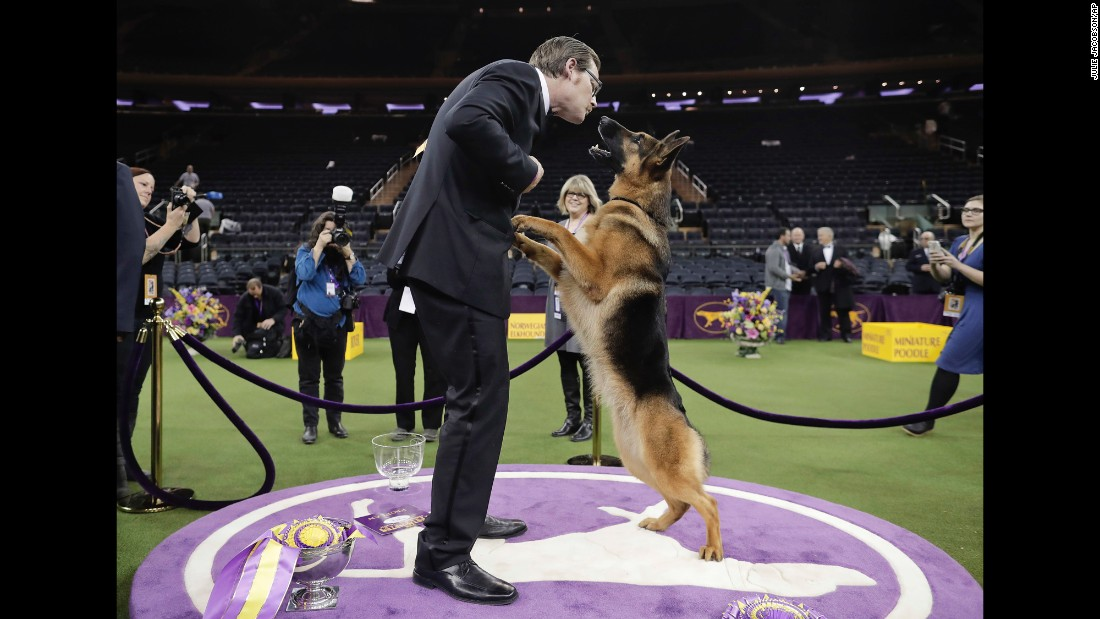"Rumor, a German shepherd, rises on her hind legs to lick her handler and co-owner, Kent Boyles, after <a href=""http://www.cnn.com/2017/02/15/sport/german-shepherd-named-best-in-show/index.html"" target=""_blank"">winning Best in Show</a> at the annual Westminster Kennel Club Dog Show on Wednesday, February 15."