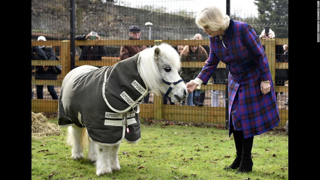Camilla, the Duchess of Cornwall, greets Pedro the Shetland pony during a visit to the Ebony Horse Club in London on Thursday, February 16.