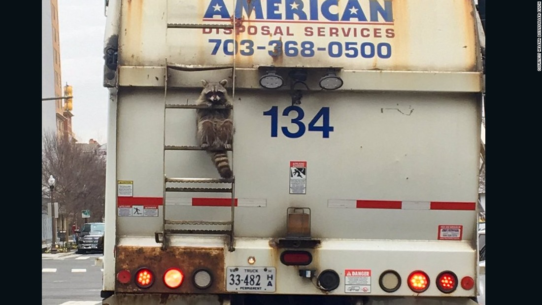 Raccoon Caught On Garbage Truck Reminds Us All To Hang In