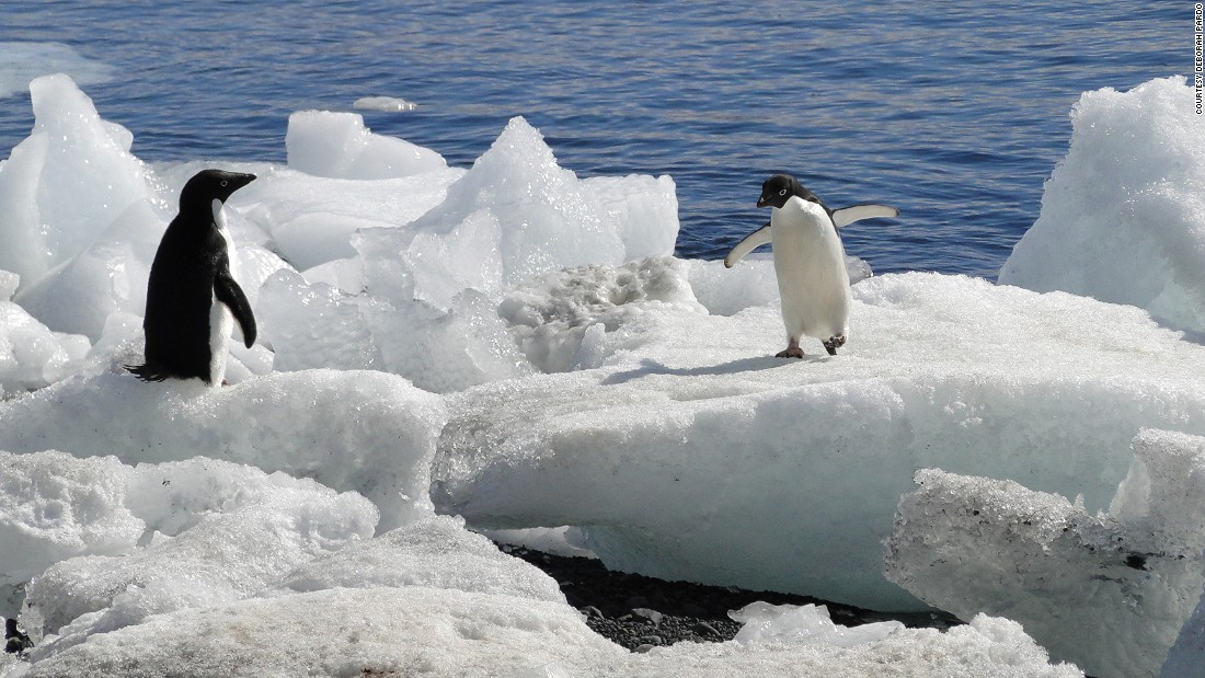 During the voyage the women encountered three species of penguins which all responded differently to their changing environment. While some species have rapidly declined, others are able to migrate and adapt to the consequences of the warmer waters.<br />