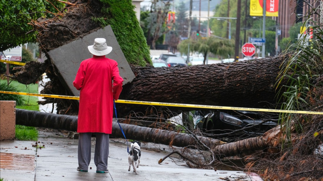A woman with her dog stops to look at a tree that crushed a car Saturday, February 18, in the Sherman Oaks section of Los Angeles.
