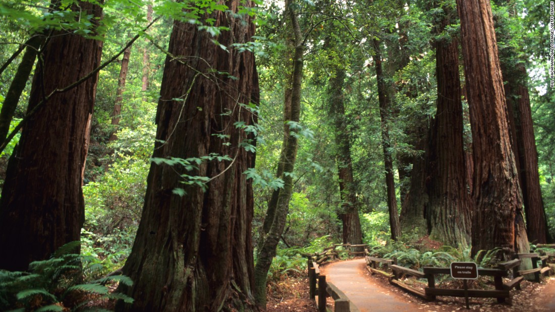 <strong>2. Golden Gate National Recreation Area, California: </strong>Hikers can spot these old redwood trees in Muir Woods, which is part of the Golden Gate site.