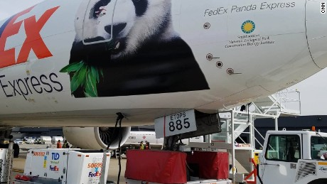 How to fly a panda halfway across the world