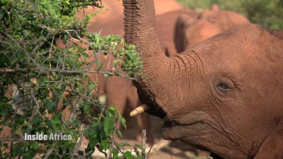 inside africa elephants a_00003905.jpg