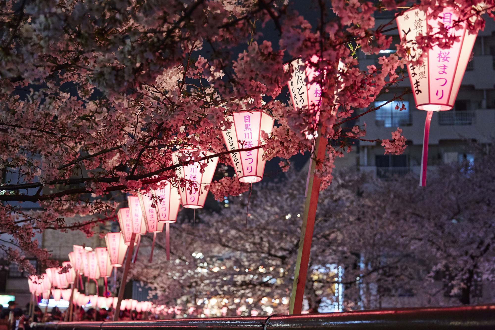 Sakura Season Guide To Japans Cherry Blossoms Cnn Travel
