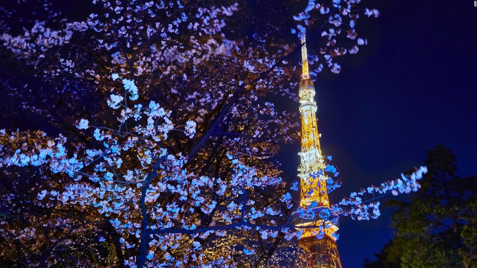 Wonderful Wallpaper Night Cherry Blossom - 170301155809-cherry-blossoms-tokyo-tower-full-169  Pic.jpg