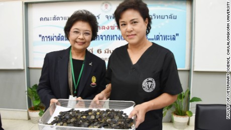 Veterinarians with Chulalongkorn University show the coins recovered from the green sea turtle.