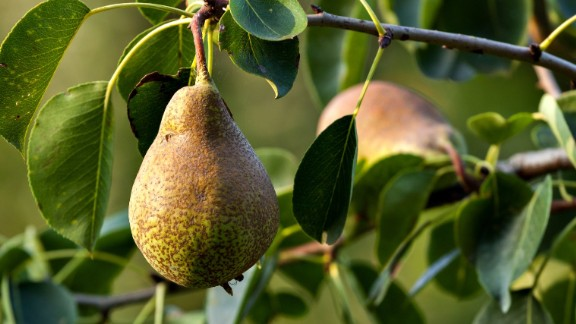 Pesticides on conventionally grown pears have increased dramatically in recent years, according to the latest tests by the USDA. Pears now rank sixth on the list, up from 22nd previously.