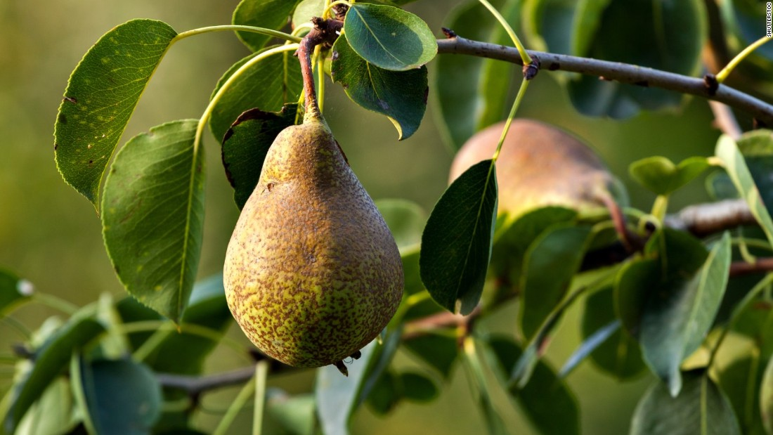 Several pesticides in high concentrations, including insecticides and fungicides, were found on this eighth-ranking stone fruit. More than half of all pears had residues of five or more pesticides, the group found.