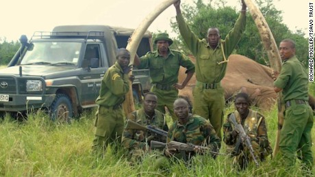 Rangers from the Kenya Wildlife Service and Tsavo Trust pose with the large, long elephant tusks of Satao II. Park rangers recovered the tusks before poachers would claim them.