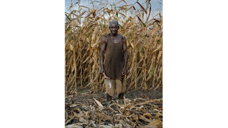 David Matandala, 75, harvesting Maize in Mlonda Village, Malawi